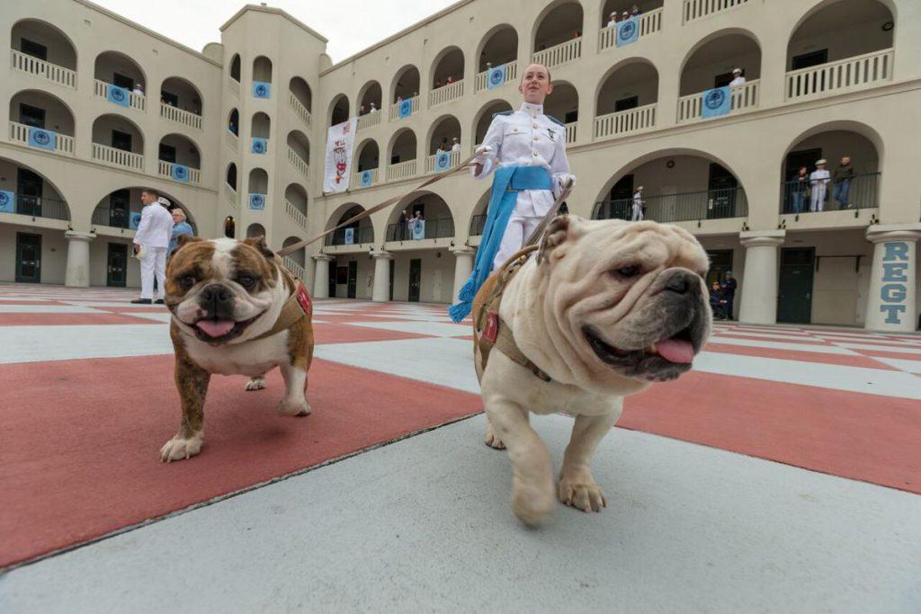 Bulldogs With Cadet Jennifer Pozzani