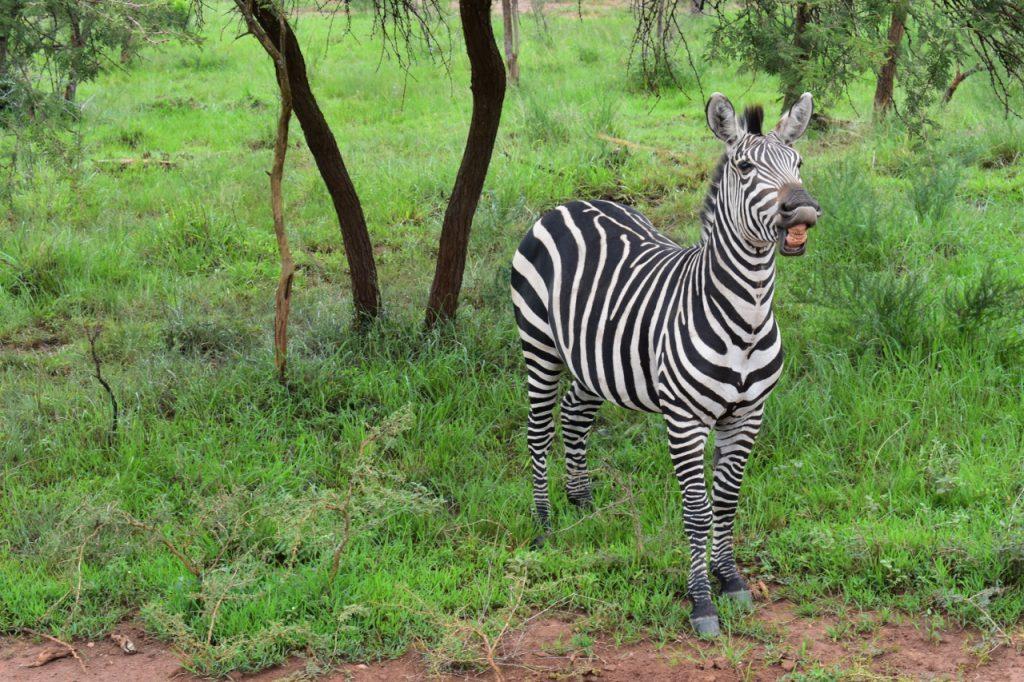 Photo by Citadel cadet on safari in Rwanda