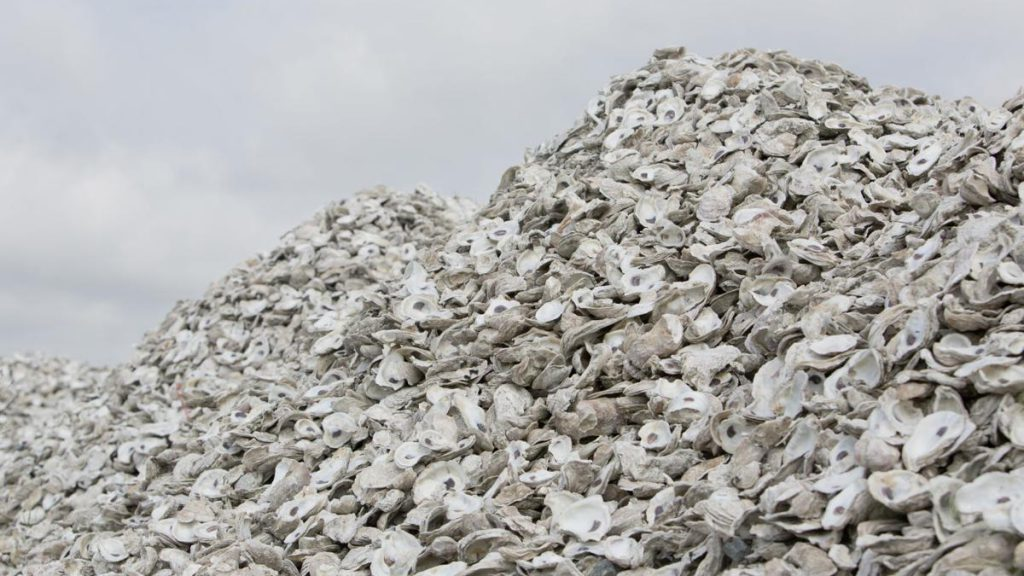 Oyster shells are put in a pile by the city of Charleston and The Citadel Foundation on a pier at Veterans Terminal in North Charleston. The shells will be used to build oyster reefs as mitigation for separate construction projects. (Courtesy: Gavin McIntyre, The Post and Courier)