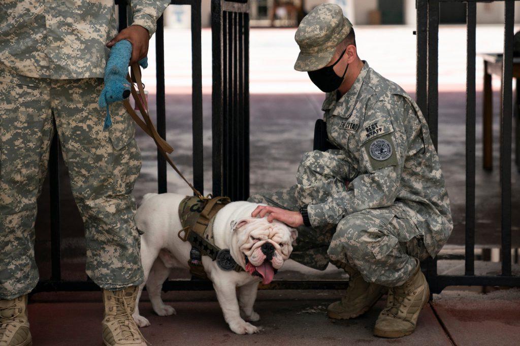 Citadel cadet pets mascot bulldog, G3
