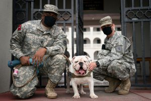 Citadel mascot Gen. Mike P. Groshon with two cadet handlers on Aug 6, 2020